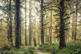 National Parks Web-14.jpg