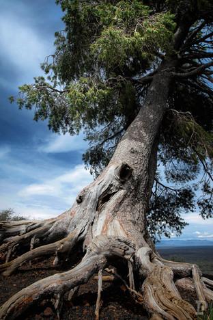 National Parks Web-12.jpg
