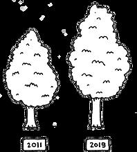 Tempo lindebomen.png