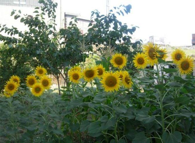 Baharda bahçemz/Our Garden in spring