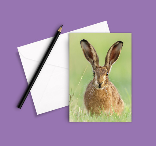 A6 Greetings Card