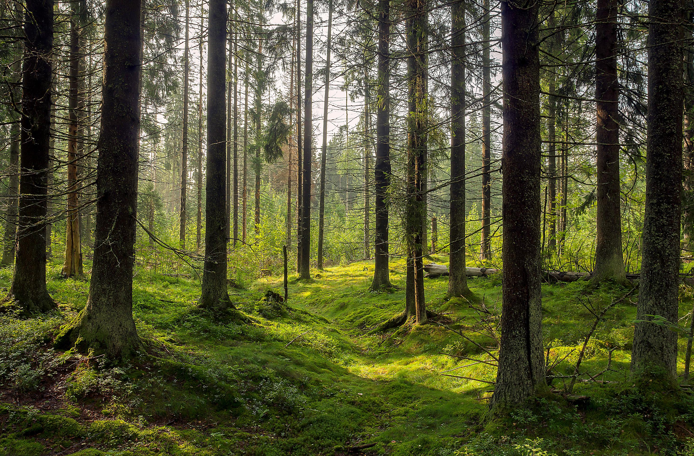 Karelia forests
