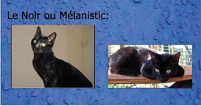 melanistic.JPG