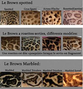 brown spotted.JPG