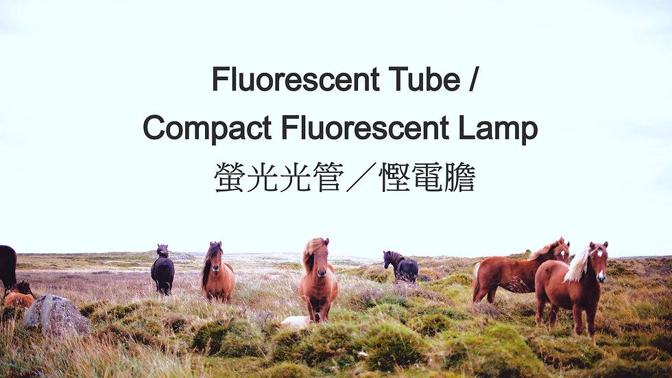 Fluorescent Tube / Compact Fluorescent Lamp 螢光光管/慳電膽