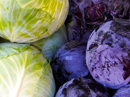 Why should we include Cabbage in our daily life?