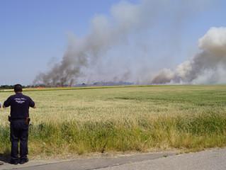 Flächenbrand auf einem Feld