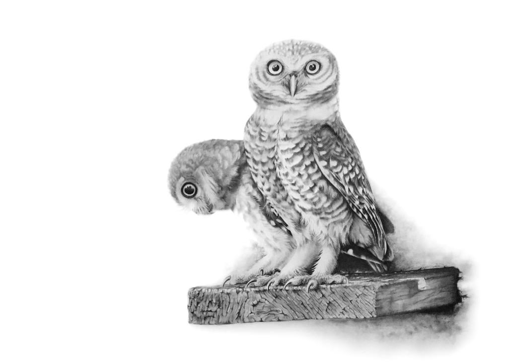 'Little Owls' (2017)