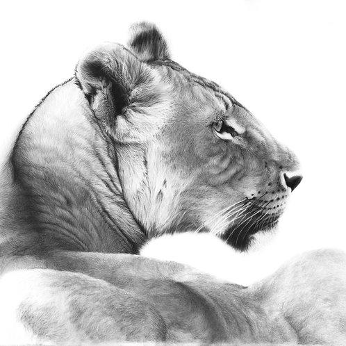 'Mara' 2020 - (Fine Art Print)