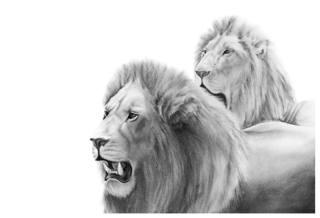 'Lion Coalition' (2013)