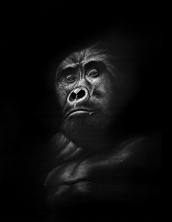 'Kahungye King' (2020)