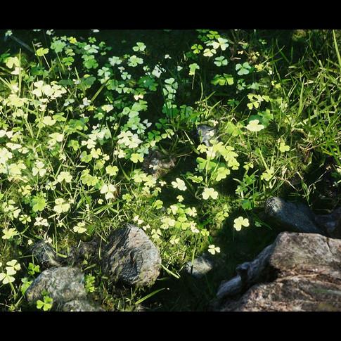 don-pham-forest-scene-c-08.jpg