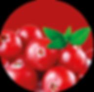 Cranberries.png