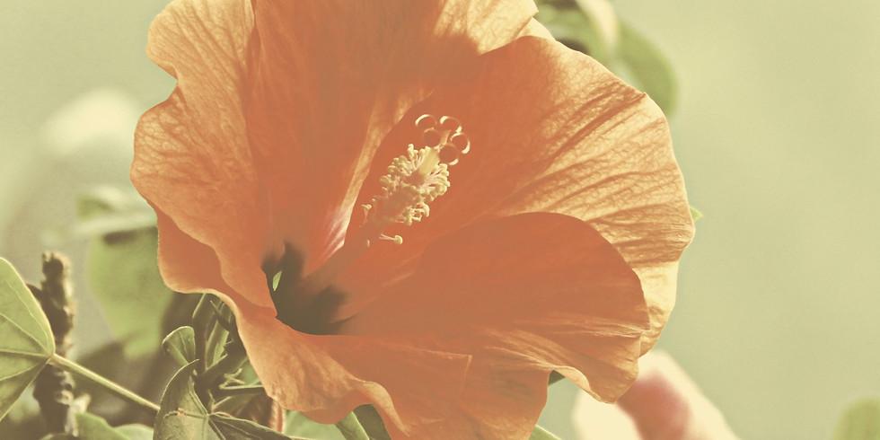 ปฐมนิเทศ Orientation: ประถมปลายไฮบิสคัส Upper EL Hibiscus