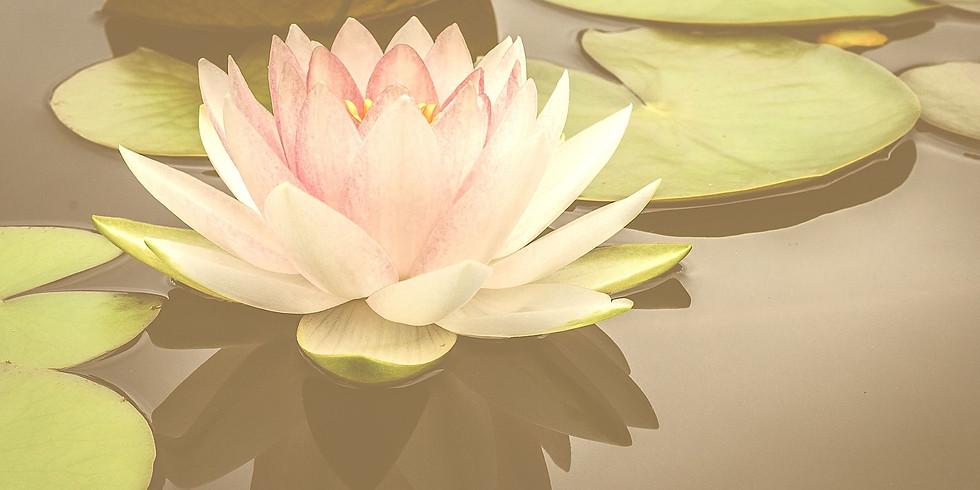 ปฐมนิเทศ Orientation: เตรียมอนุบาลโลตัส Toddler Lotus