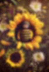 FBSkylarSunflower.jpg