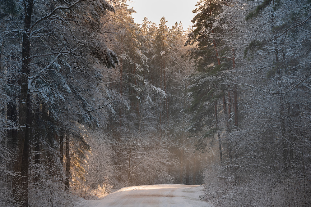 Intimate telephoto of a forest in golden winter afternoon light