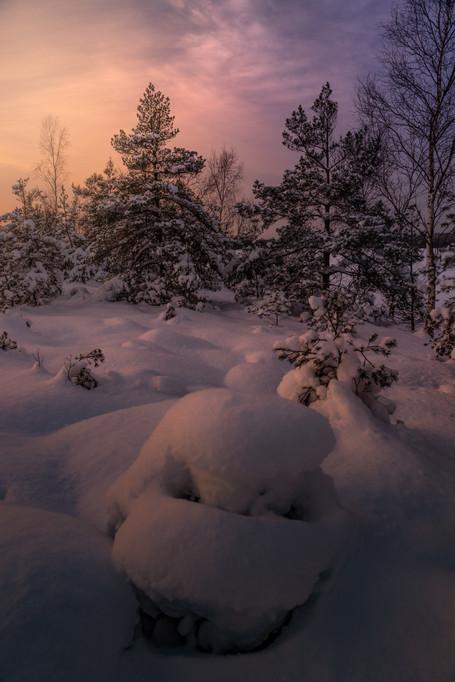 SNOW SWAMP
