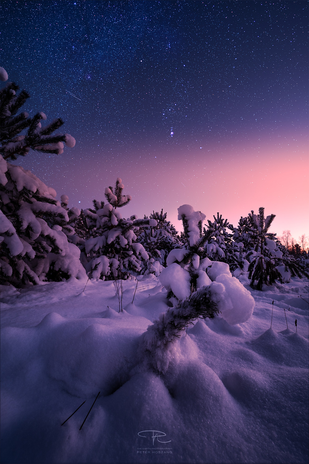 Snow covered pine trees during the Baltic dusk with Orion constellation visible in the starry sky