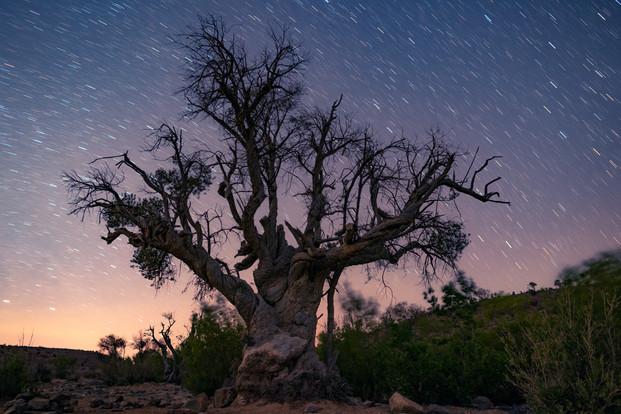 THE WRINKLED TREE