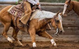 cutting horse.jfif