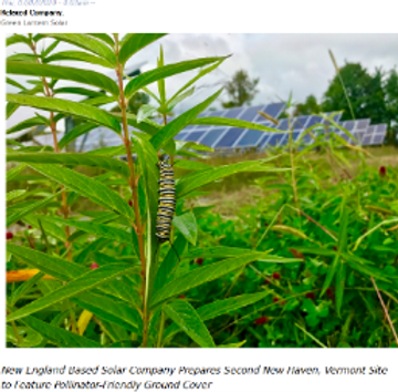 New England Based Solar Company Prepares Second New Haven, Vermont Site to Feature Pollinator-Friendly Ground Cover