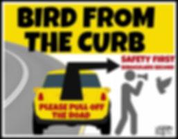 BirdFromTheCurb1.jpg