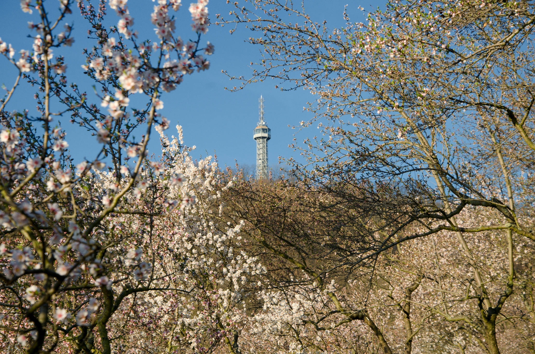 The Petrin Observation Tower