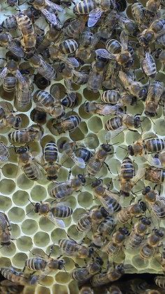 """Patenschaft """"Aarauer Bienenwabe"""""""