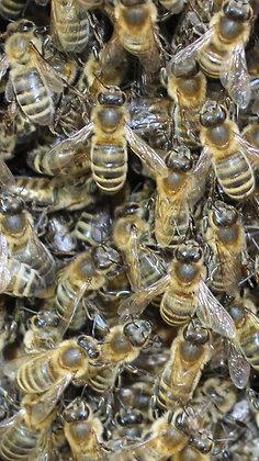 """Patenschaft """"Aarauer Bienenschwarm"""""""