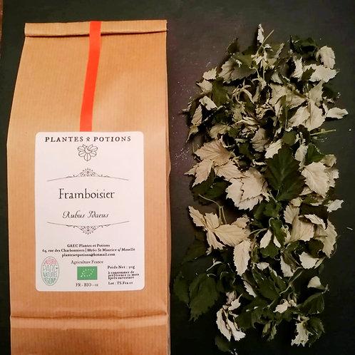 Framboisier feuille | Rubus Idaeus