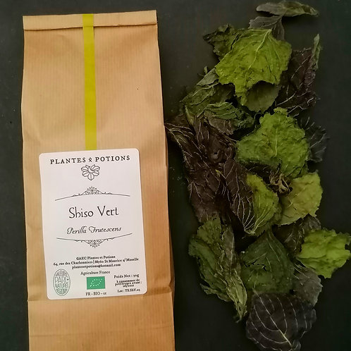 Shiso Vert | Perilla Frutescens