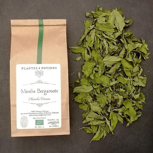 Menthe Bergamote | Mentha Citriodora