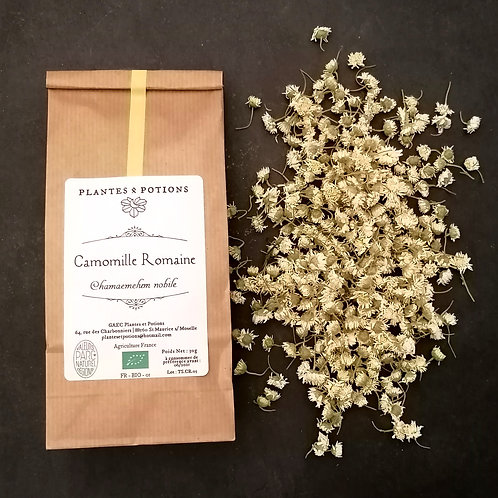 Camomille Romaine | Chamaemelum Nobilis