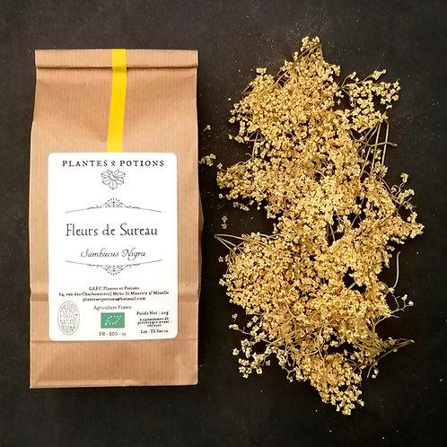 Sureau Fleurs | Sambucus Nigra