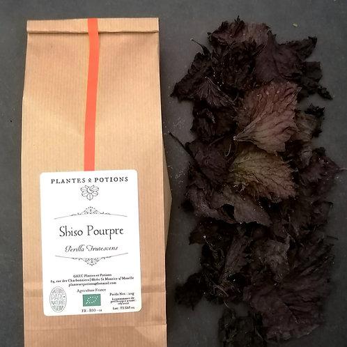 Shiso Pourpre | Perilla Frutescens