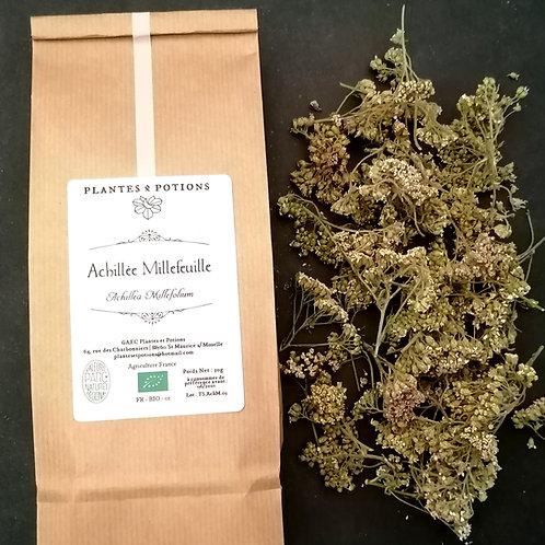 Achillée Millefeuille | Achillea Millefolium