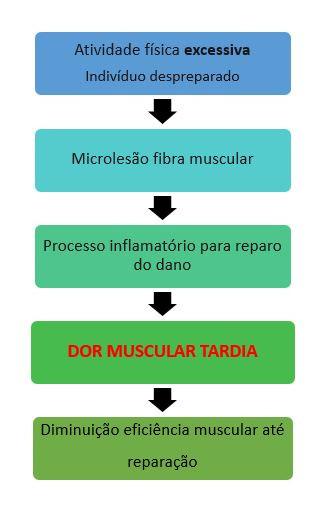 Resumo Dor muscular tardia - GranDoctor