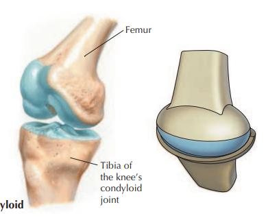 Exemplos de articulações, com cartilagem em azul