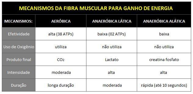 Metabolismo Muscular - GranDoctor