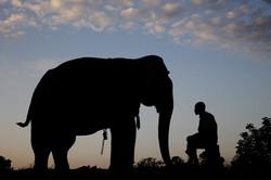 BIRMANIE, Eléphants