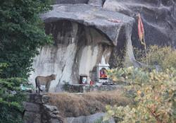 INDE, Léopard Indien