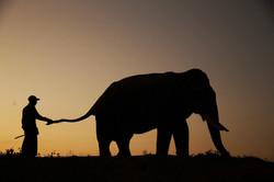 BIRMANIE,   Jungle Eléphants