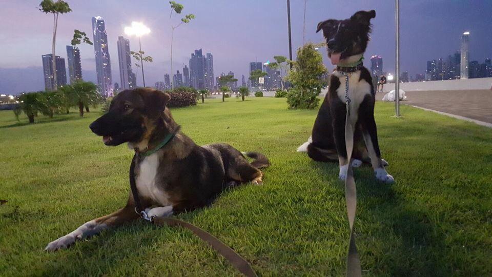 Локки и Триша (Панама)