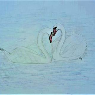Swans MB.jpg