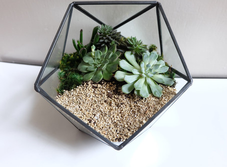 How to make your own succulent terrarium