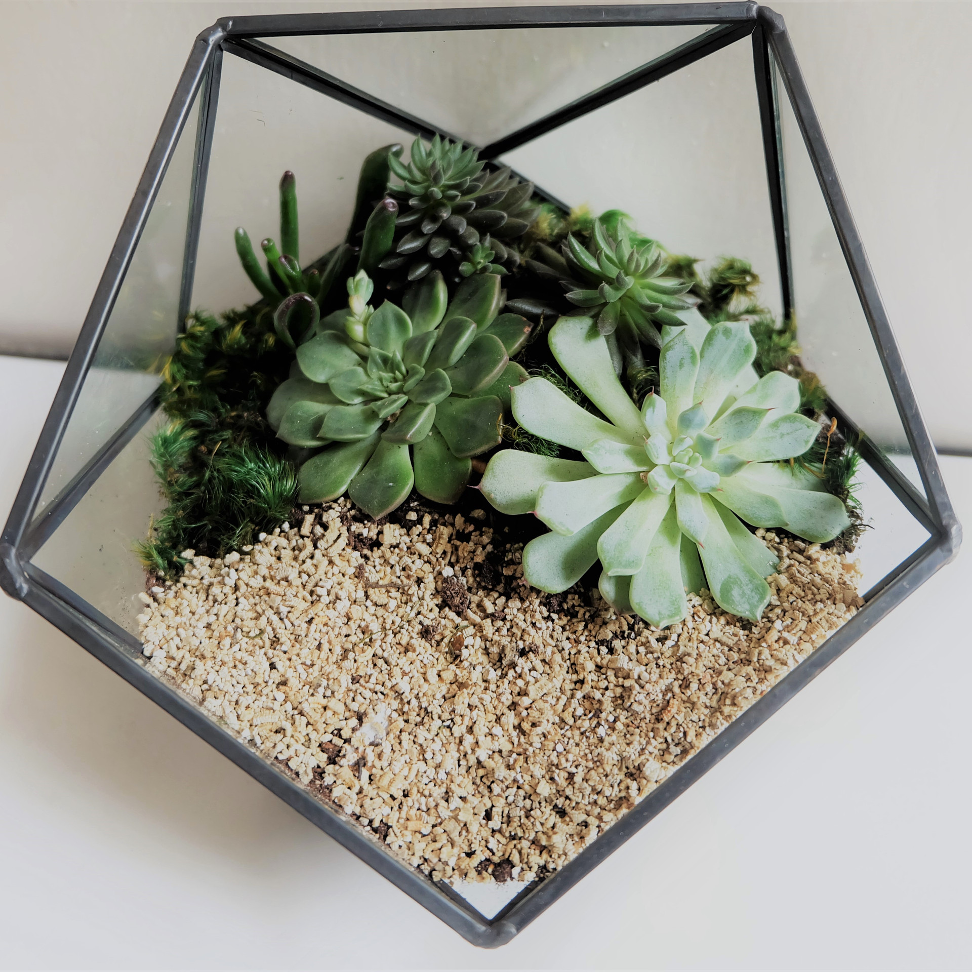 Mountain Terrarium