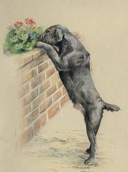Digger - a terrier mix