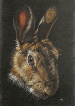 completed-rabbit