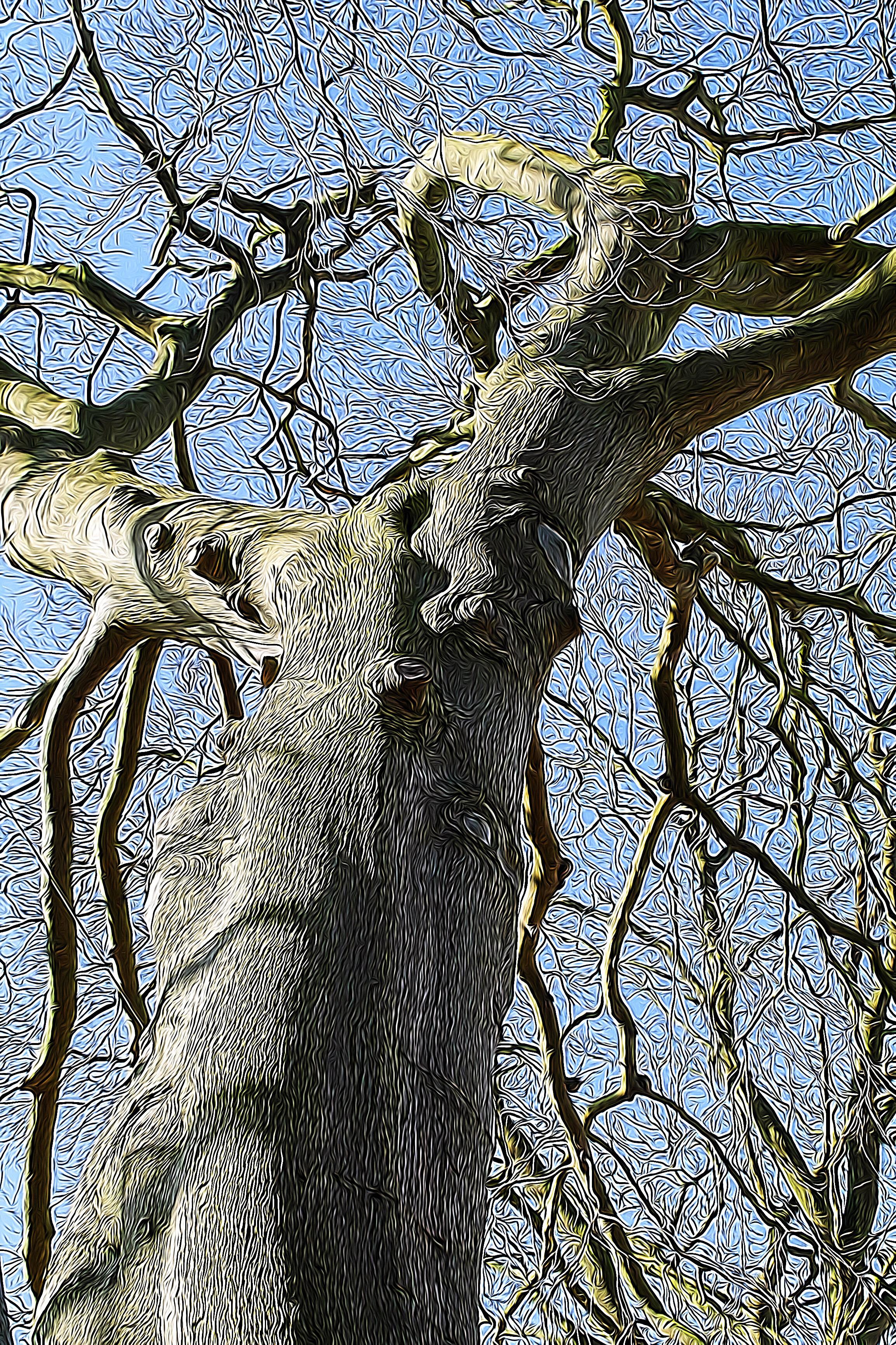 tangled bare tree